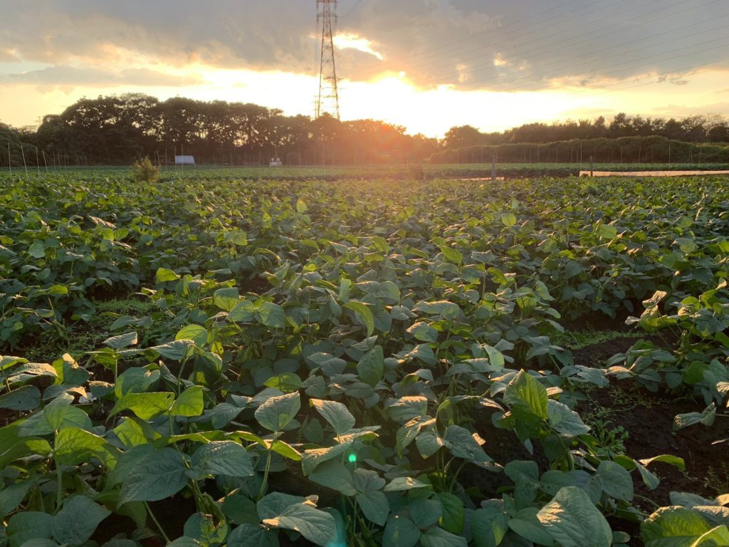 【枝豆の豆知識その9】枝豆の発祥地