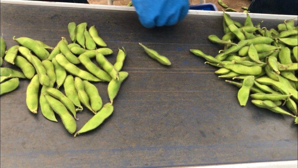 枝豆の数え方