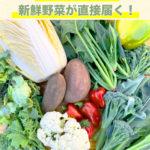 産地直送の野菜通販