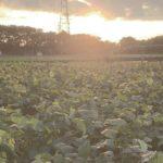 かまくら農園公式ブログ