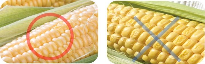 トウモロコシの見分け方