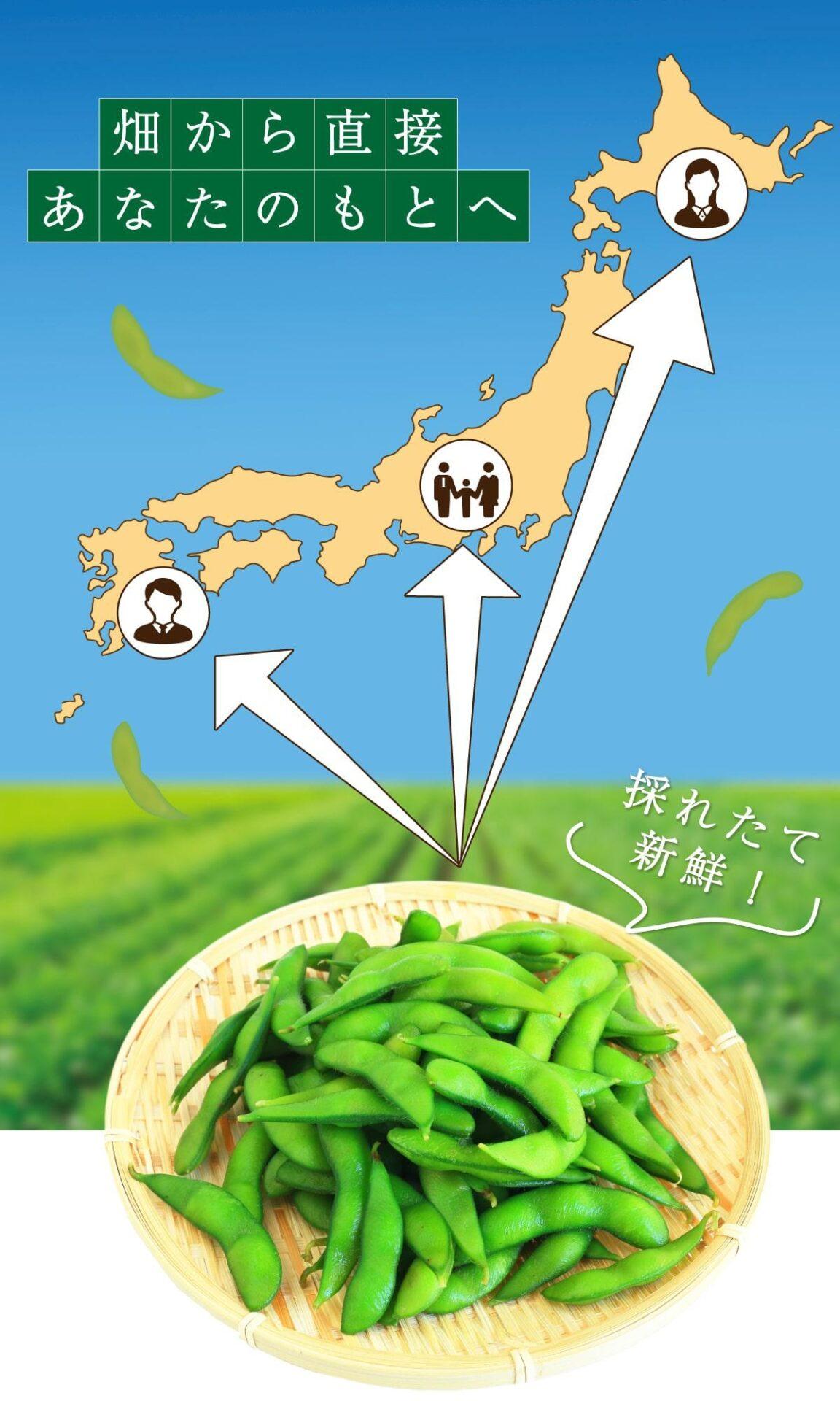 美味しい国産枝豆の通販